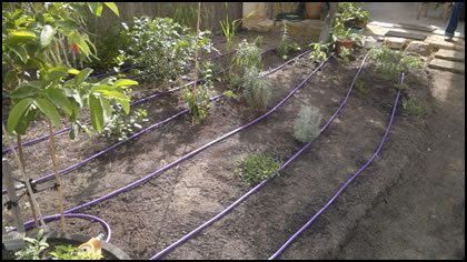 Greywater to Garden Beds before being covered with Mulch
